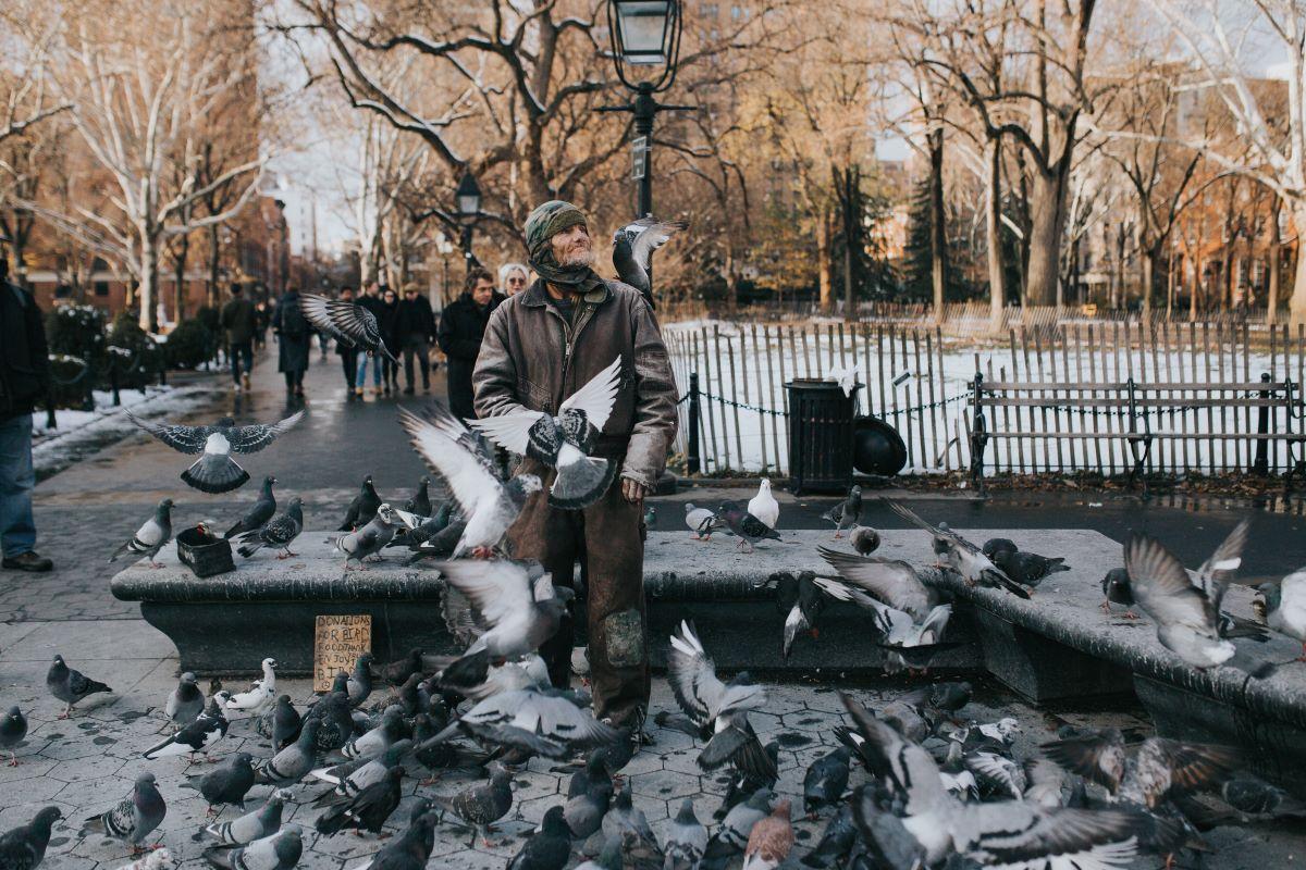the pigeon Man